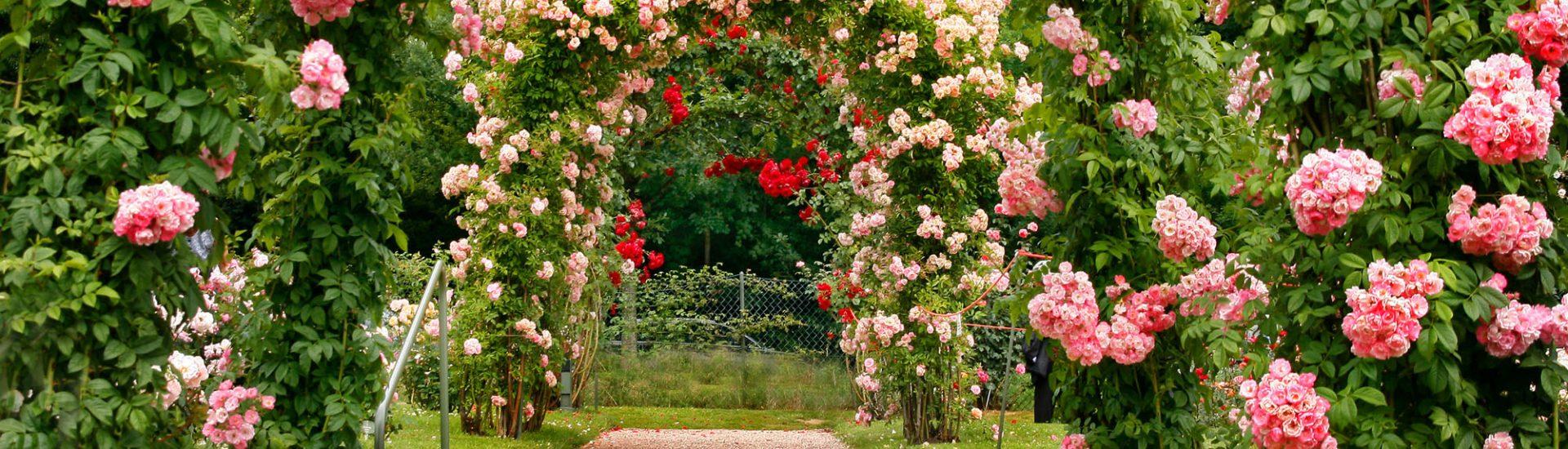 Ein Rosenbogen in Rost bringt eine romantische Stimmung in den Garten